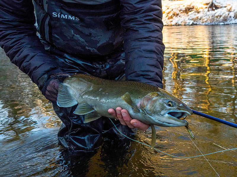Happy New Year         - Pere Marquette River Fly Fishing